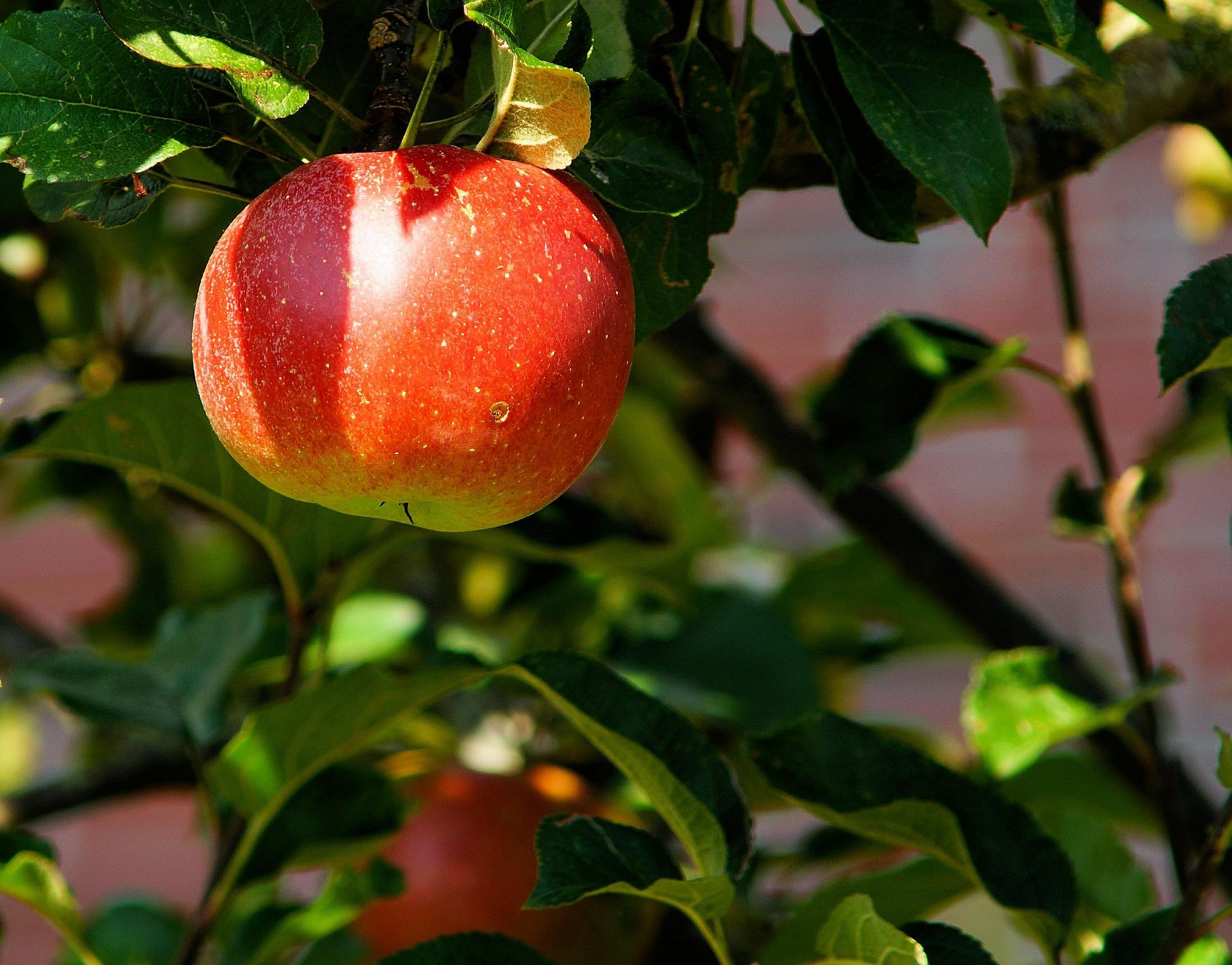 AgriGest Bio - Il software per aziende agricole